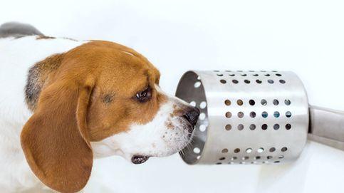 Pusieron a tres perros a oler el cáncer de pulmón y lo detectaron el 97% de las veces