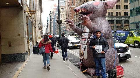 La rata sindicalista que acosa a empresarios y contratistas en Nueva York