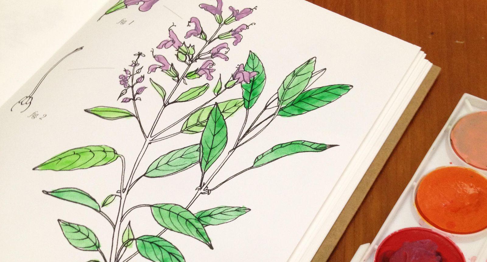 Libros Pinta Dibuja Y Colorea El Nuevo Fenómeno Editorial Para