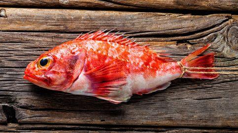 Cabracho: de pez de roca a pescado gourmet