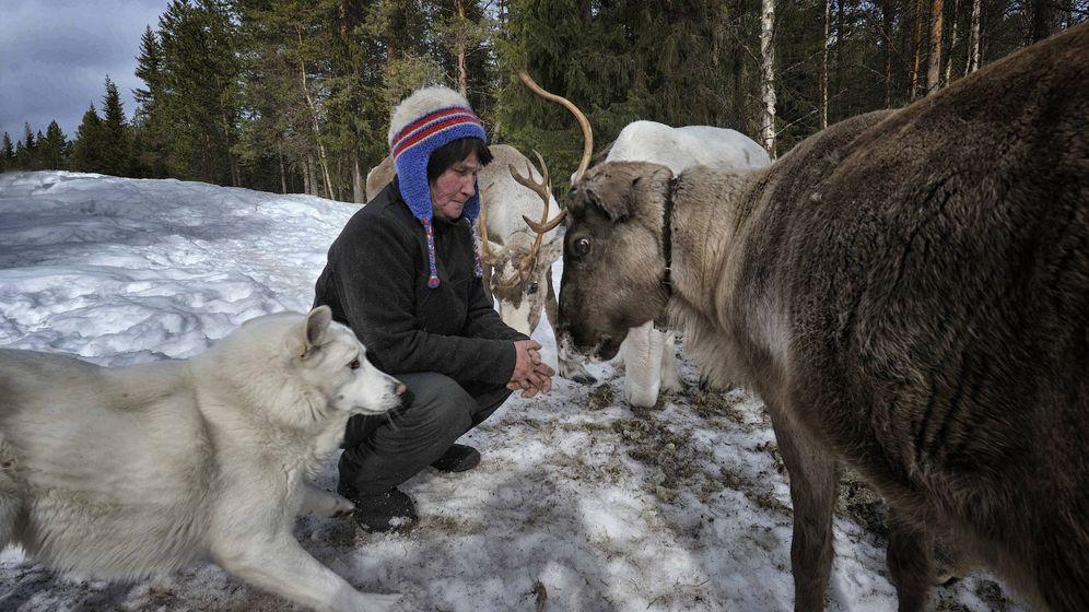 Foto: Un sami, rodeado de perros de nieve y un reno (Foto: Eduardo Miola)