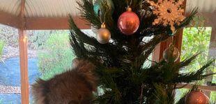 Post de Una familia australiana se encuentra a un koala en su árbol de Navidad