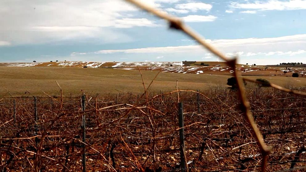 ¿Cuáles son ahora mismo los mejores vinos españoles por menos de 15€?
