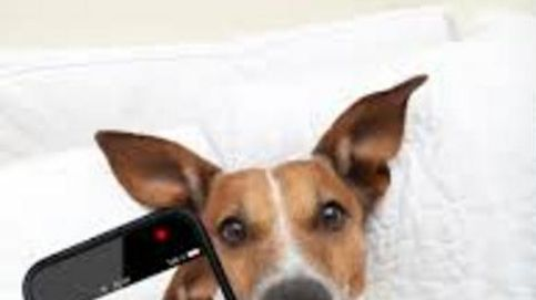 Seis apps imprescindibles para amantes de las mascotas