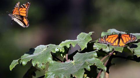 20 años protegiendo la biodiversidad