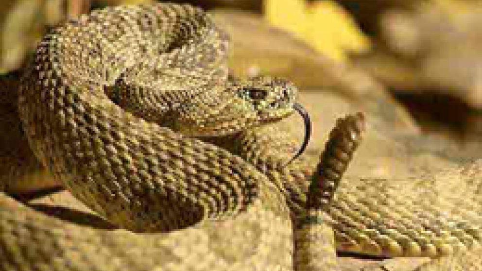 ¡Ojo con las mordeduras de serpiente en verano!