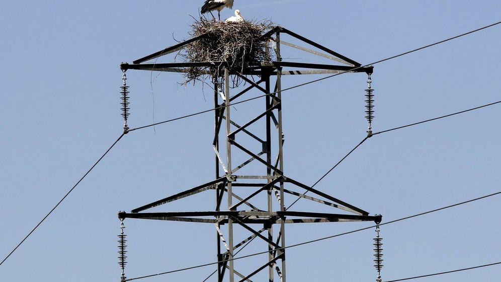 Foto: Unas cigüeñas en un poste del tendido eléctrico. (EFE)
