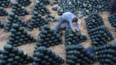 De flores a sandías: en Chipiona se reinventan para superar la crisis provocada por el coronavirus