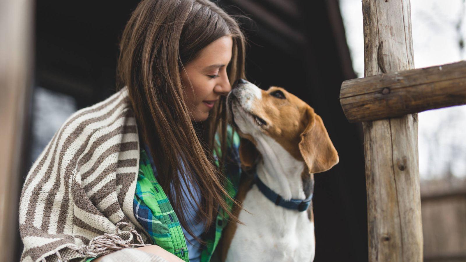 Asi Es La Brucelosis La Enfermedad Que Tu Perro Puede Contagiarte