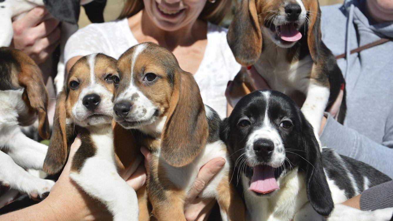 Rescatan a nueve cachorros abandonados en un contenedor de basura