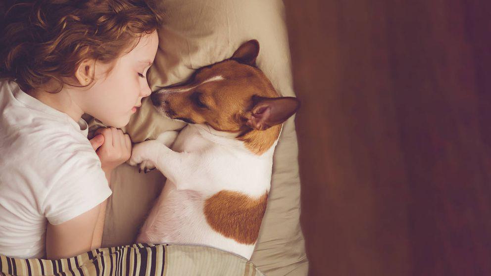 Los perros entienden tus palabras cuando hablas: demostrado