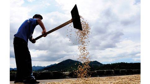 El mejor café del mundo se cultiva y elabora en Brasil