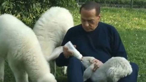 Berlusconi, el defensor de los corderos: pide a los italianos que no los coman en Pascua
