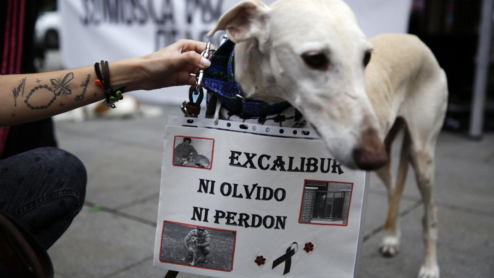 Foto: Los 200 dolientes del perro Excalibur