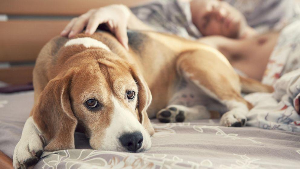 Clínica Mayo: dormir en la cama con tu mascota quizá no sea buena idea