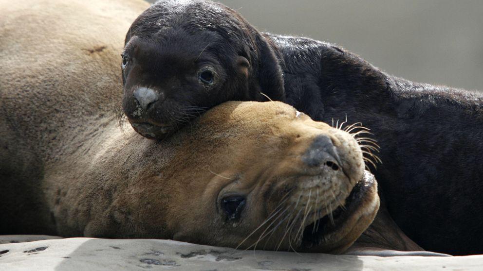 Las imágenes más tiernas del mundo animal