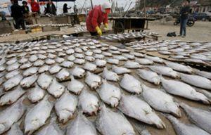 Ojo con el pescado a la plancha: aumenta la concentración de arsénico