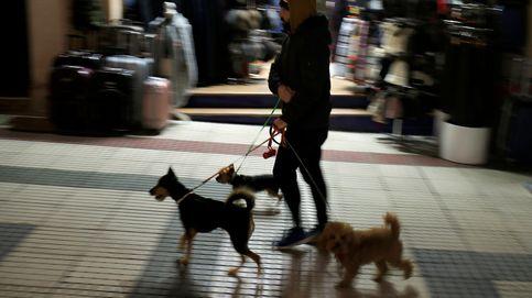 Irán prohíbe pasear a perros y montarlos en coche porque son impuros