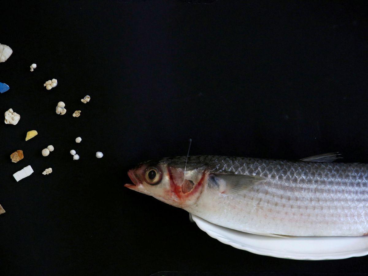 Foto: Los micriplásticos estan contaminando toda la cadena trófica (REUTERS)
