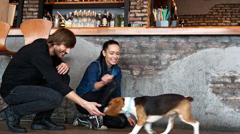 6 restaurantes dogfriendly para visitar con tu mascota en Madrid y Barcelona