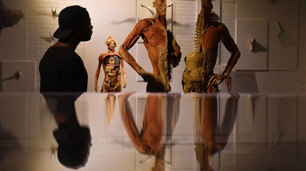 Ciencia: Marsupio, orejas de murciélago y piel de rana: así sería el ...
