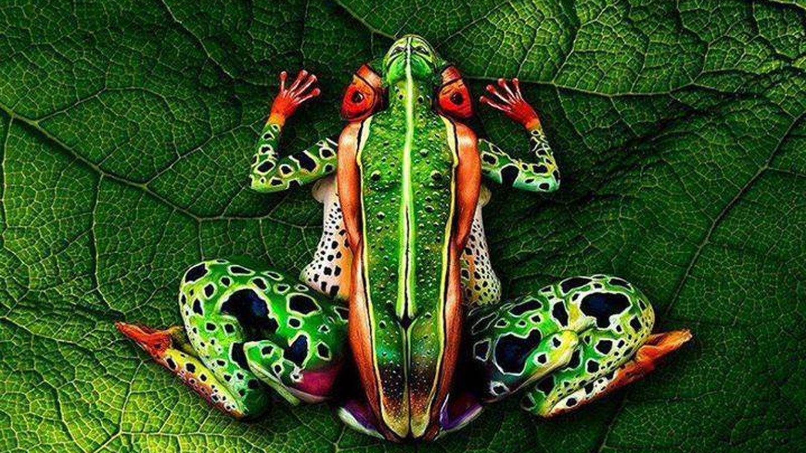 Foto: ¿Esto es una rana? Puede no ser lo que parece