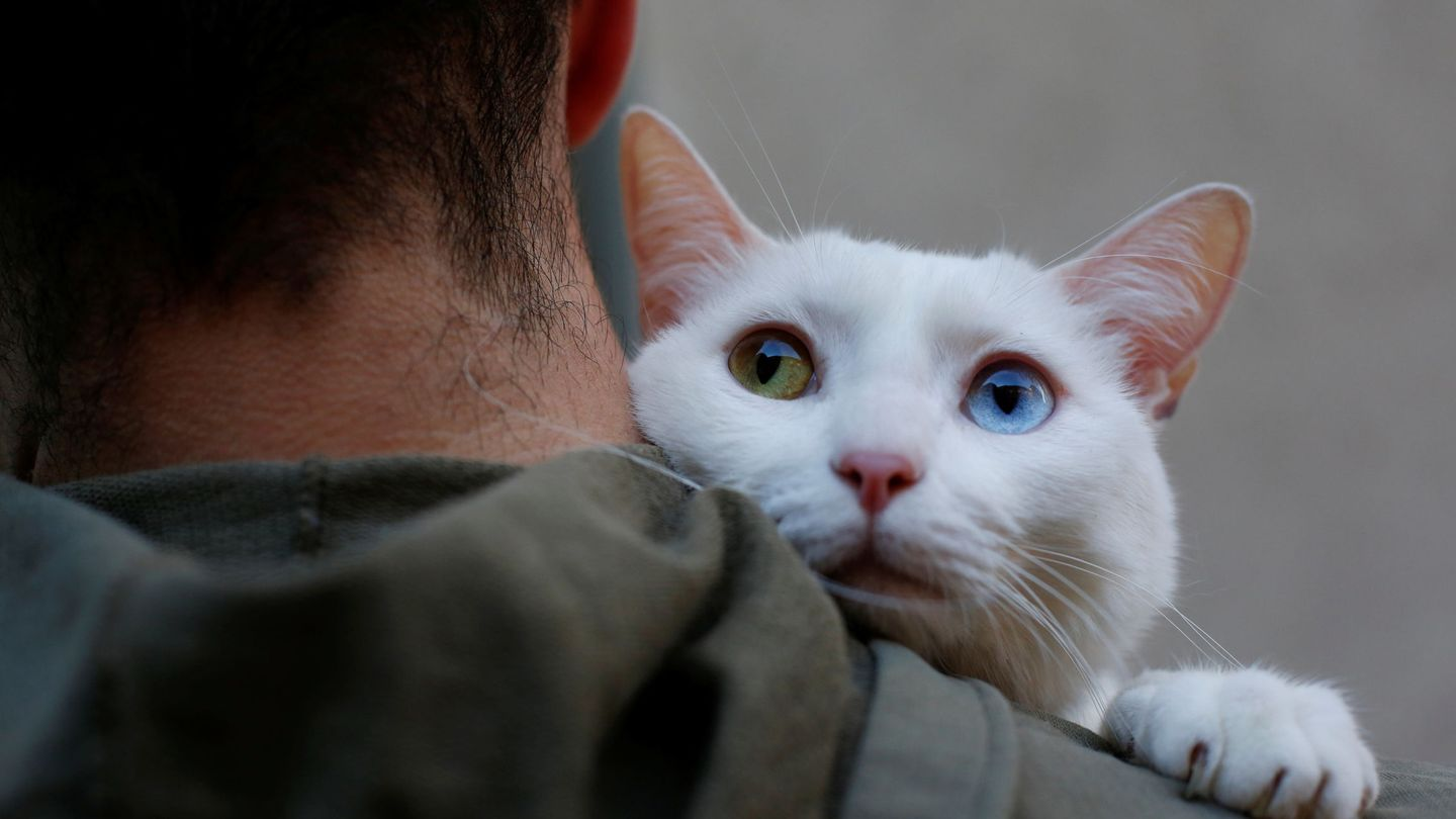 Two-year-old cat 'Onis' waits to be blessed by a priest outside San Anton Church in Madrid, Spain, January 17, 2018. Hundreds of pet owners bring their animals to be blessed every year on the day of Saint Anthony, Spain's saint patron of animals. REUTERS Susana Vera