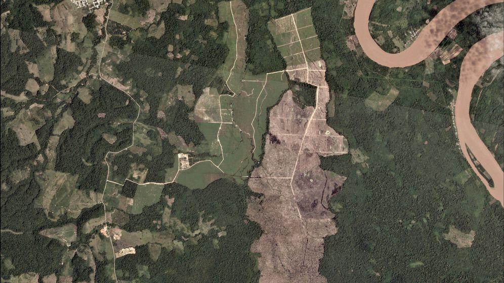 Foto: Una plantación de aceite de palma, en mitad del Amazonas (Reuters)