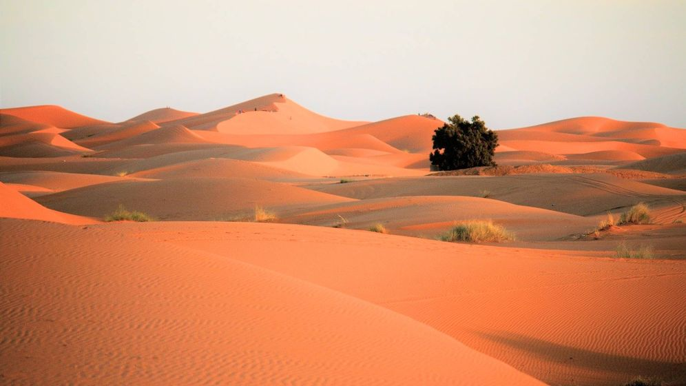 Foto: ¿Dónde está el ejército perdido de Cambises? Cómo el Sáhara se 'tragó' a 50.000 soldados. (Pixabay)