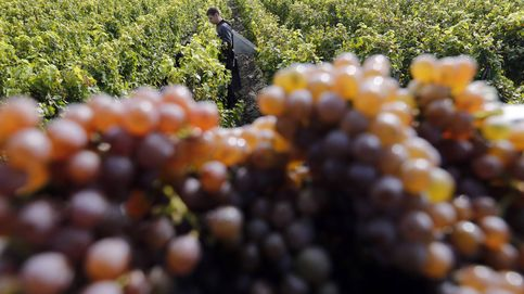 El vino, la nueva batalla en la guerra agrícola francoespañola