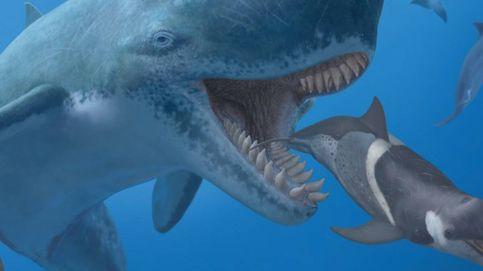 La caza del Leviatán: Durero y la ballena que acabó con él