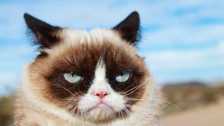 Tardar Sauce, fotografiado por sus dueños | The Official Grumpy Cat