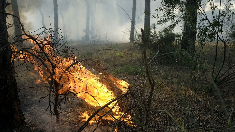 El consejero de MMAA, sobre el incendio en Doñana: No se va a recalificar un metro