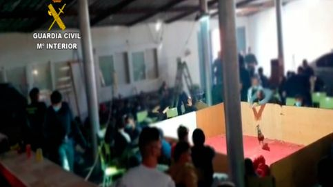 Disuelven una pelea de gallos ilegal en Almería con 90 personas presentes