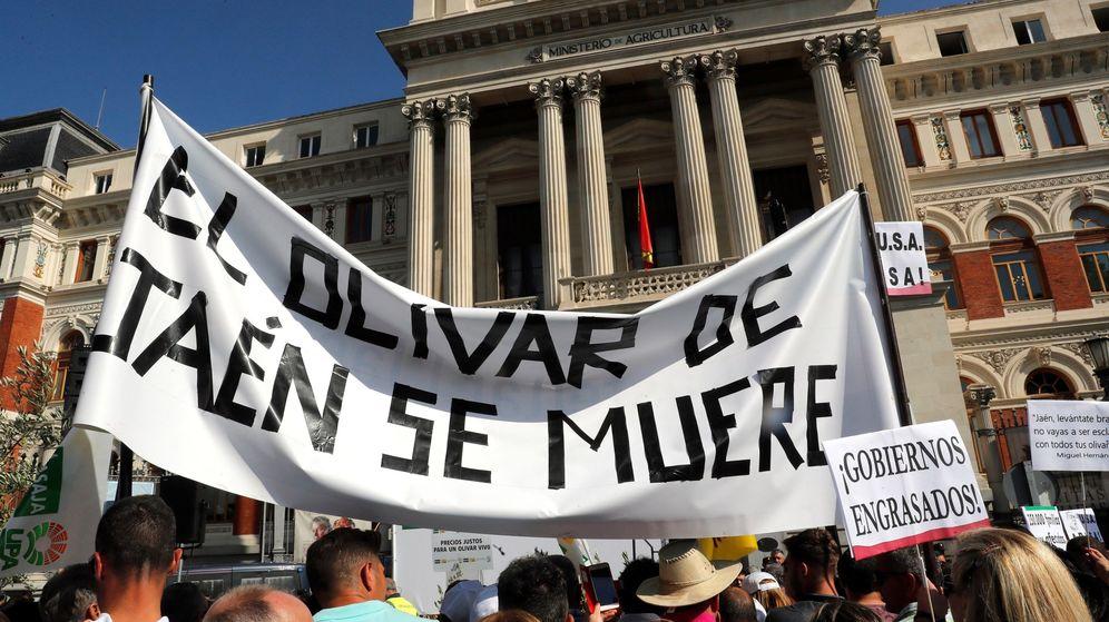 Foto: Manifestación que bajo el lema 'Precios justos para un olivar vivo'. (EFE)