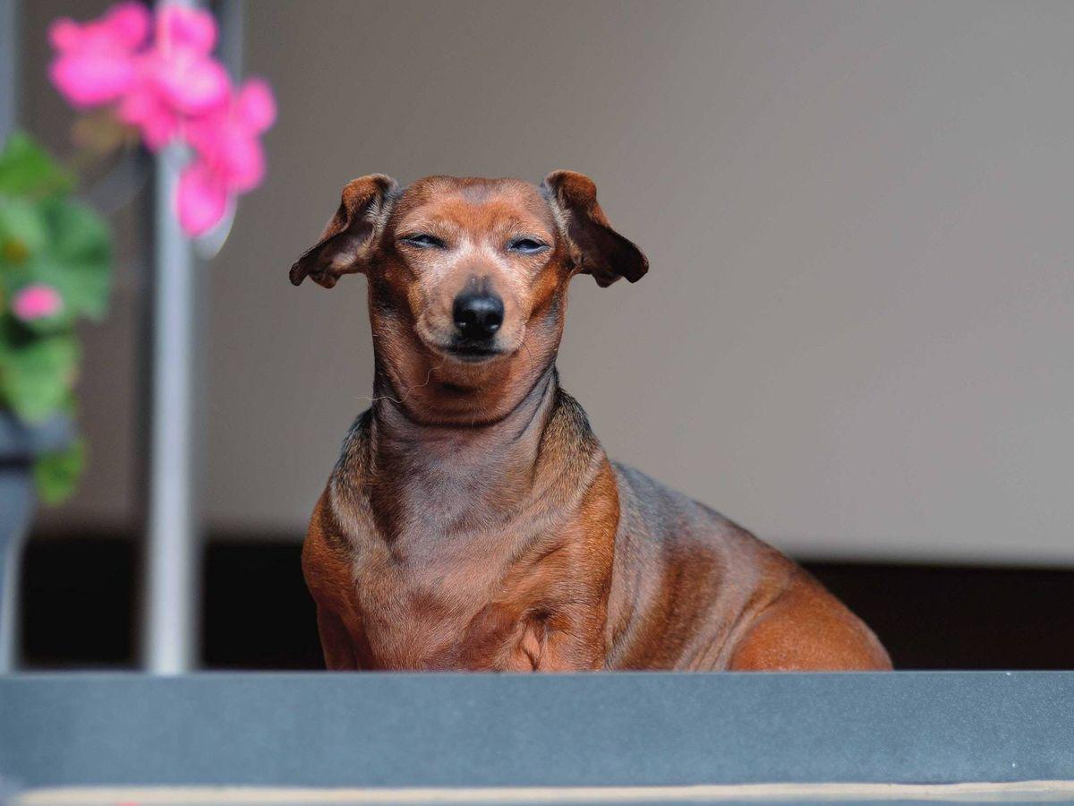 Foto: El animal tiene ahora un aspecto que dista del descrito a las autoridades (Unsplash)