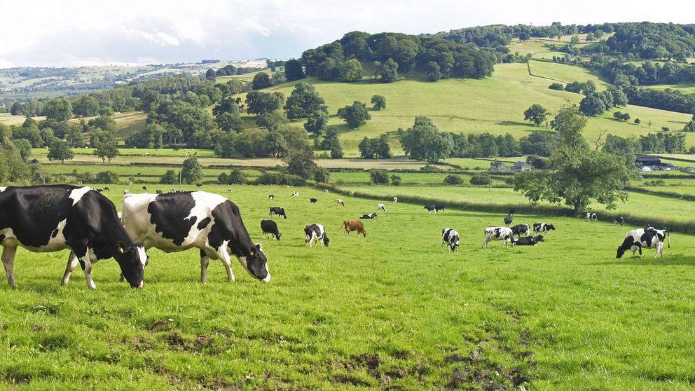 ¿Qué carnes contribuyen menos al cambio climático?