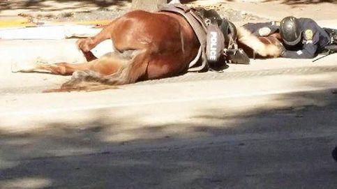 Amigos hasta el final: un policía mima a su yegua después de ser atropellada