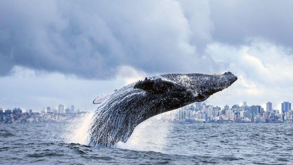 Foto: Las ballenas están volviendo a las rías gallegas. (EFE)