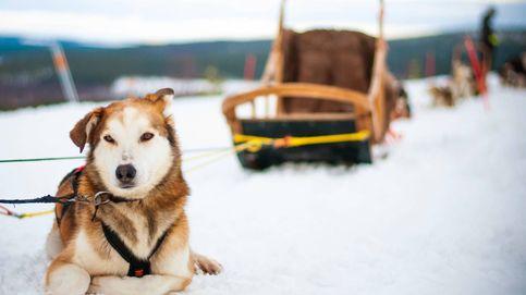 Huskies y auroras boreales en casa de Papá Noel: un fin de semana en el círculo polar