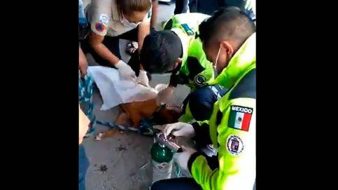 Protección Civil reanima y salva a un perro al que picó un enjambre de abejas