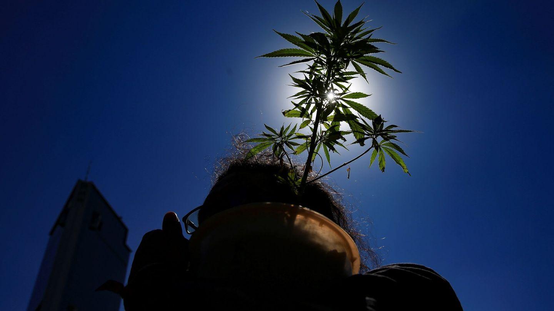 Cada vez son más los países donde la marihuana, ya sea con fines medicinales o recreativos, se ha legalizado. (Reuters)