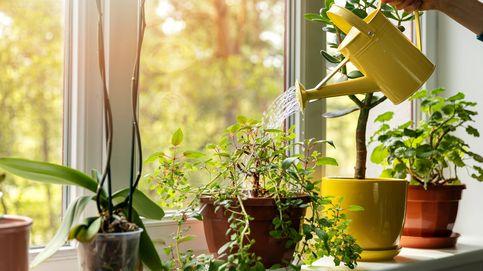5 consejos para ahorrar agua cuando riegas tus plantas