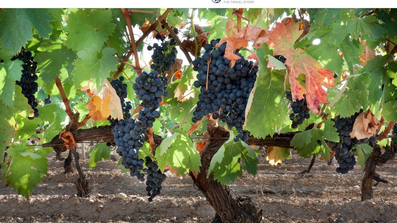 Visita a la bodega CVNE y cata de vinos: qué ver en Azofra