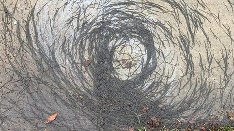 El curioso 'tornado de gusanos' para el que los científicos no tienen explicación