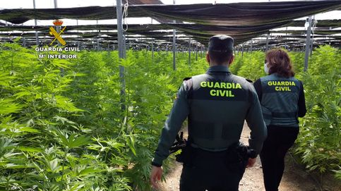 Desmanteladas en Sevilla 17 plantaciones de marihuana, con 17 detenidos