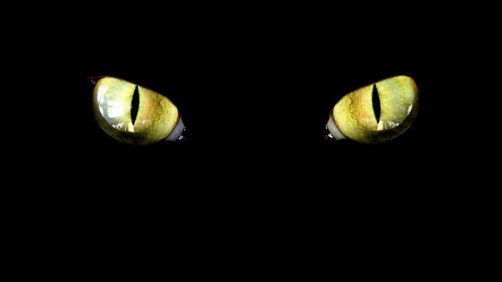 ¿Qué es un gamusino? Animal mitológico, receta o broma para cazadores novatos