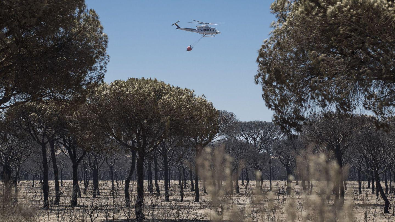 Un helicóptero sobrevuela un pinar en el entorno del Espacio Natural de Doñana. (EFE)