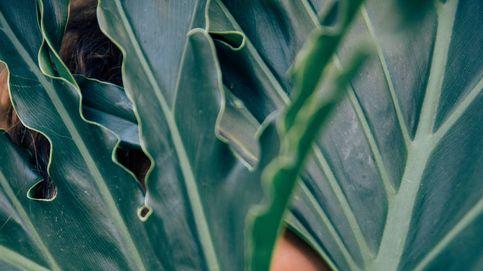 Orejas, brazos… Aprende a cuidar los cinco grandes olvidados beauty