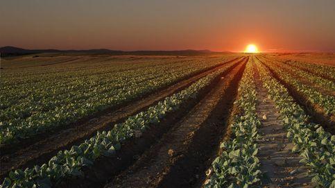 Medio año sin trasvase Tajo-Segura y Murcia tiene agua: el 'milagro' que aviva la polémica